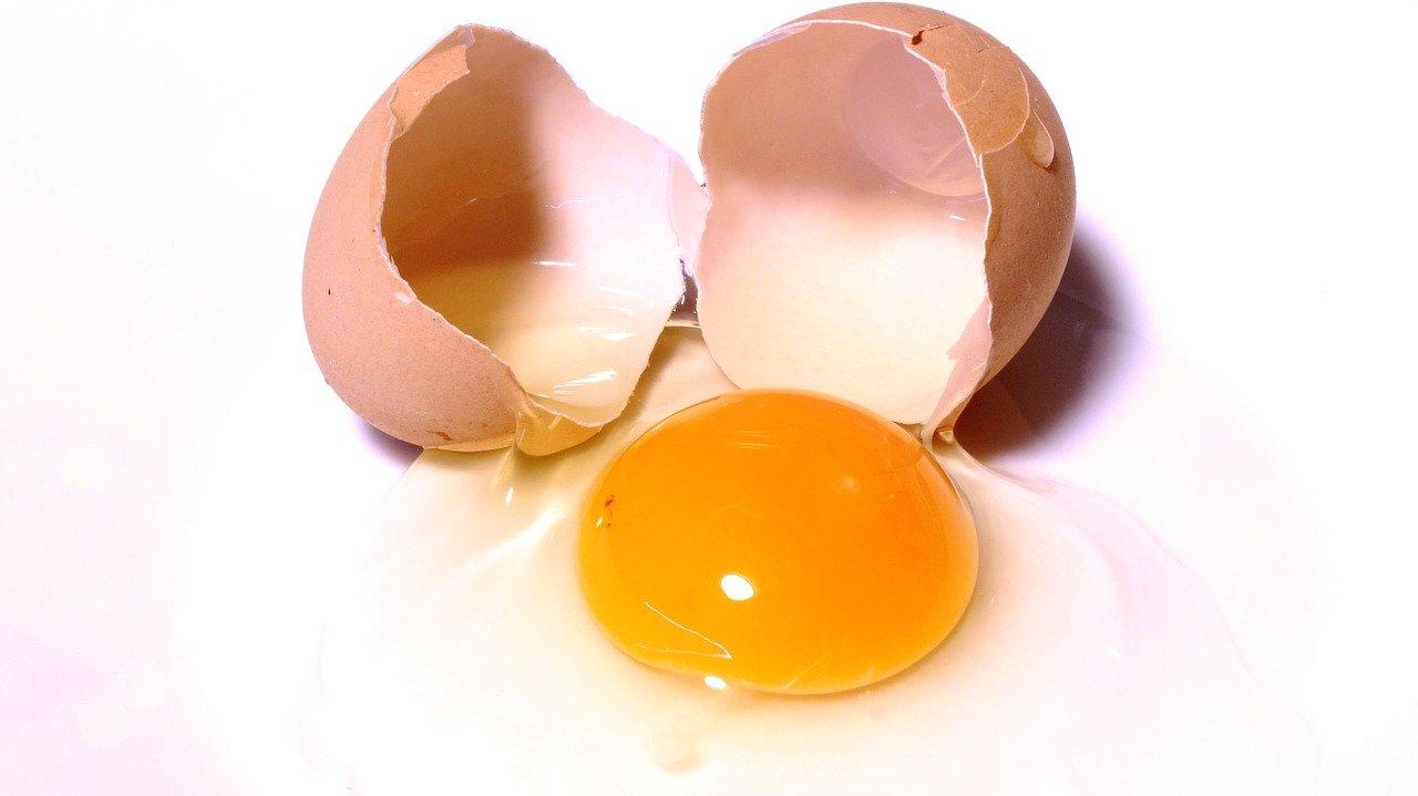 L' œuf : l'apport en protéines du sportif par excellence