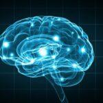depositphotos_77436984-stock-photo-human-brain